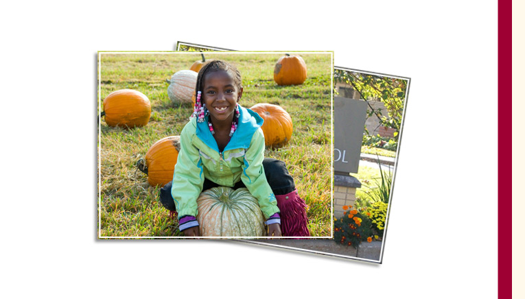 Studts pumpkin patch and corn maze opens for October