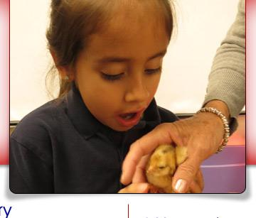 student with baby chick