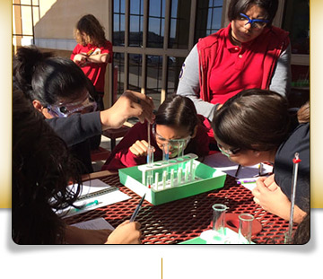outdoor science project
