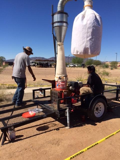 Harvesting Mesquite Flour